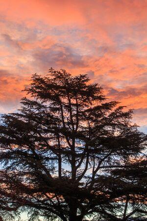 Backlit tree with reddish dawn in the background. Sunrise concept Foto de archivo