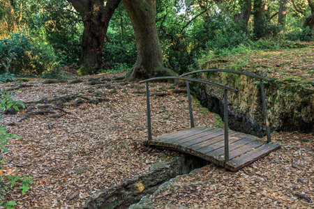 Small wooden bridge with iron railings in oak forest with leaves. Concept elements in Nature