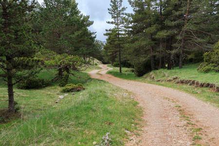 Winding mountain dirt road between trees