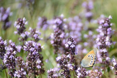 butterfly and flowers photo