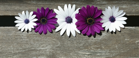 closeup of pink daisy with: purple and white daisies on wood Stock Photo
