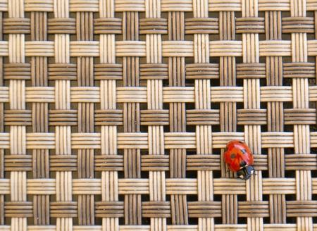 critter: ladybug on a tablecloth Stock Photo