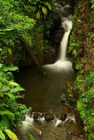 Waterfall in the tropical jungle of the Carribean photo