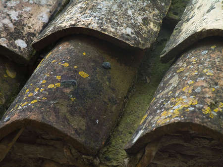 clinker tile: Roofing tiles with aging yellow marks of an old house