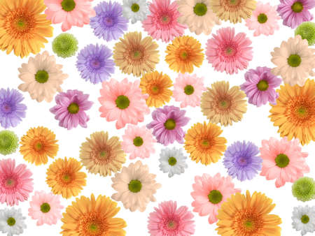 Beatiful  gerberas for your spring designs photo