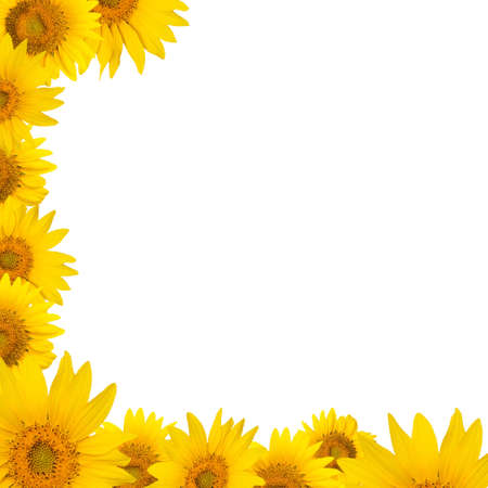 A border ( frame ) made of sunflowers