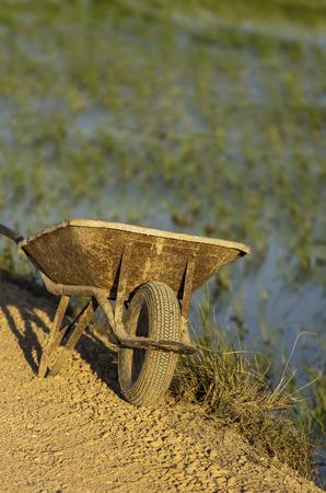 Vintage wheel barrow rice field