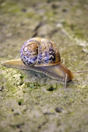 land snail on the ground