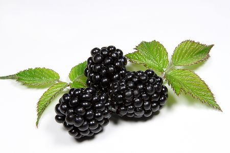 blackberries,fruit,berries,