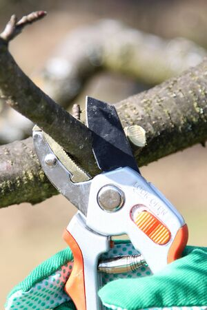 Hand holding pruning shears,pruning or trimming  branches from a tree or bush