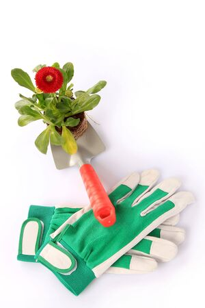 Closeup of gardening gloves with flowering red plant on trowel, isolated on white studio background. photo
