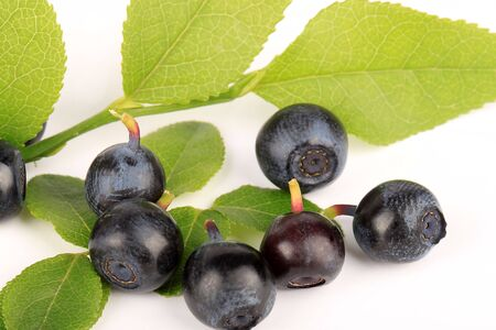 A macro view of a blueberry fruits photo