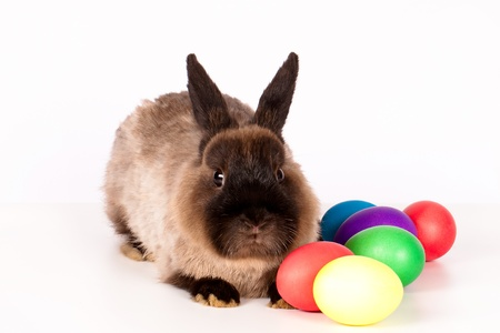 Easter scene of brown rabbit and colored eggs. photo