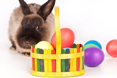 Rabbit or bunny with basket or colorful easter eggs in foreground; isolated on white. Stock Photo