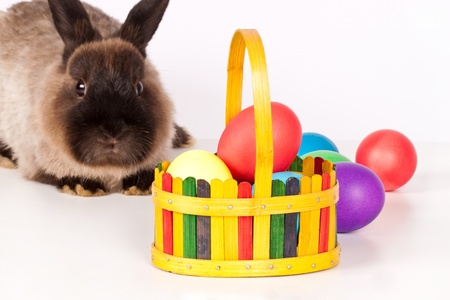 Rabbit or bunny with basket or colorful easter eggs in foreground; isolated on white. Stock Photo - 8838790
