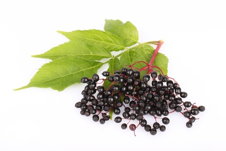 Elderberries in a bunch with leaves, isolated. Stock Photo