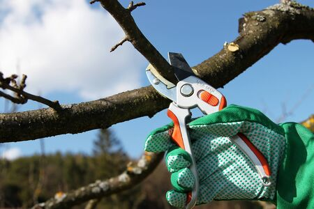 Pruning twigs and branches