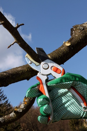 Pruning twigs and branches photo