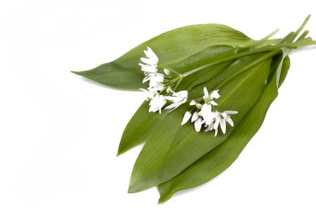 Fresh Wild garlic with flowers on a white background photo