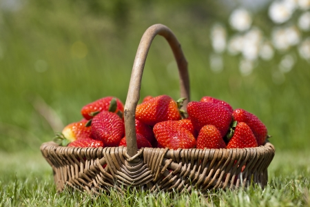 Strawberry in a basket on a grass photo