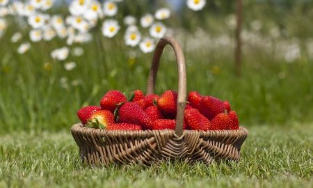 Strawberry in a basket on a grass Stock Photo - 13602983