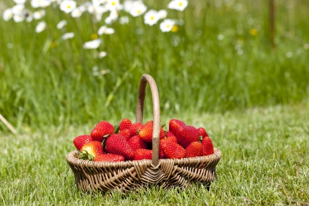 Strawberry in a basket on a grass Stock Photo