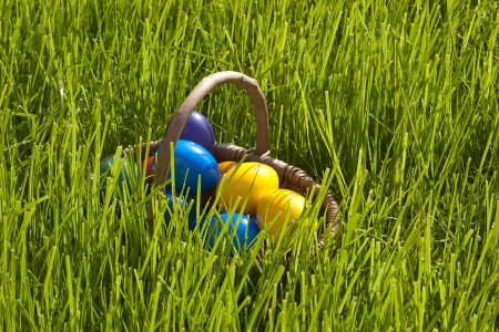 Plain colorful Easter Eggs in a bastket photo