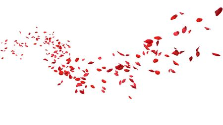 Red rose petals floating in curve flow path on a white background