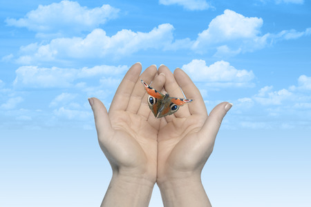 letting: Womans hands letting the butterfly be free to go