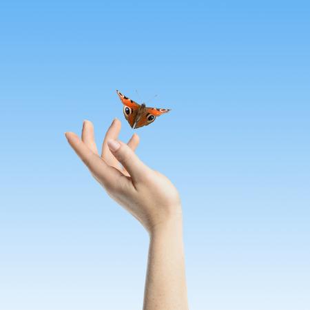 symbol hand: Womans Hand lassen den Schmetterling frei, zu gehen