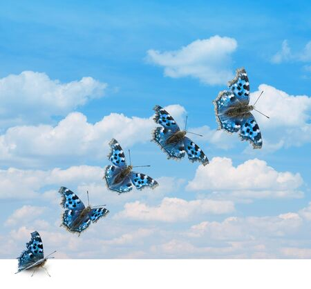 takeoff: Several positions of butterfly takeoff in sky