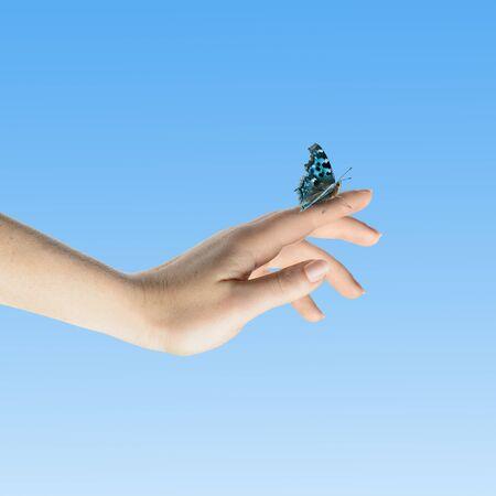 Womans handen te laten van de vlinder zijn vrij om te gaan Stockfoto