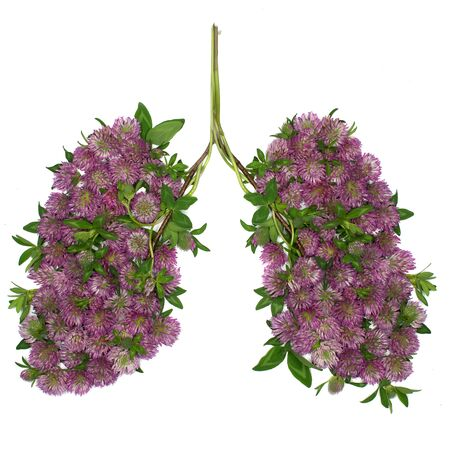 healthful: Flowers of clower arranged in shape of human lungs. Clower is very healthful for lungs.