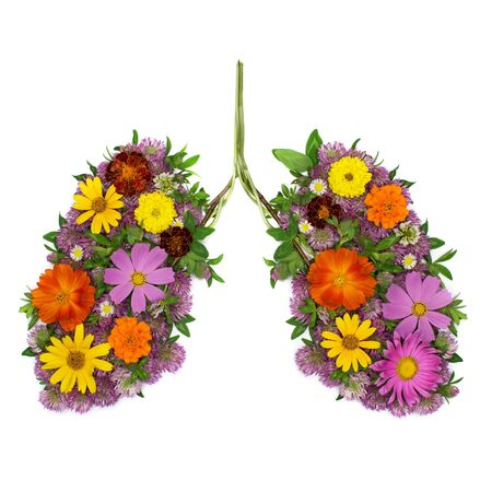 Flowers arranged in shape of human lungs as symbol of healthy life 写真素材