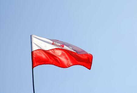 polish flag:  polish flag flying on the wind