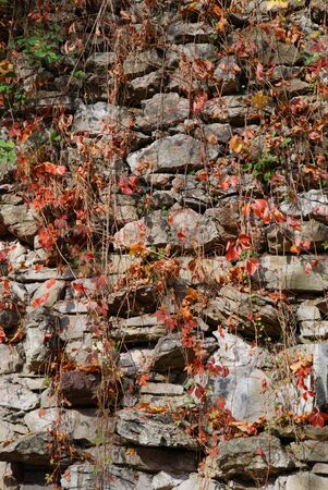 Stone wall with leafs photo