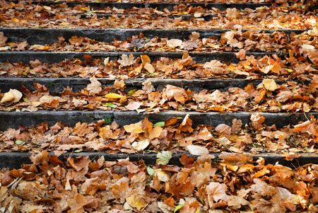 Piles of autumn leaves accumulate on steps - background image. photo
