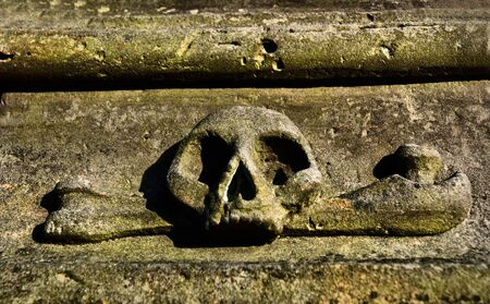 old skull from graveyard photo