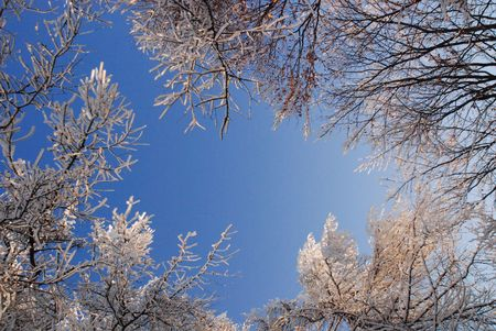 Winter landscape with frosty trees and bushes  photo