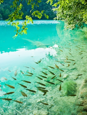 plitvice: Small fish in lake, national park Plitvice, Croatia Stock Photo