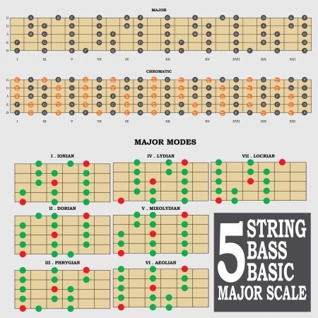 minor: 5 string bass basic major scale for bass player teacher and student Illustration