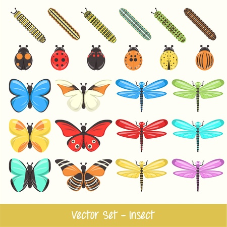 Insect Vector Set Vector