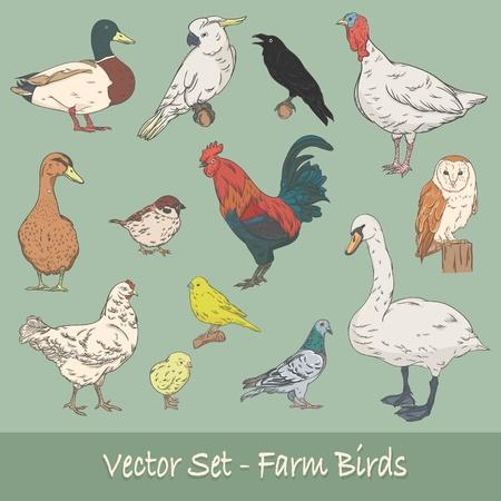 Farm Birds Vector Set Illustration