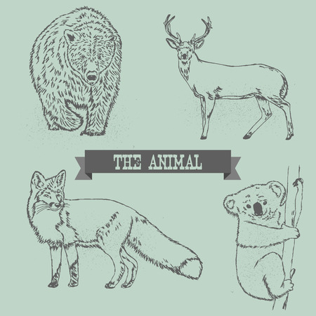 Bear, Deer, Red Fox, And Koala line drawing Vector