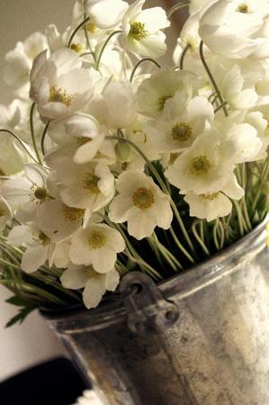 windflower: Snowdrop Windflowers Bouquet