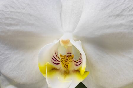 The beautiful flower of white orchid. Macro photograph of a flower detail, isolated on white background. Magnification, enlargement, blow-up, close up.