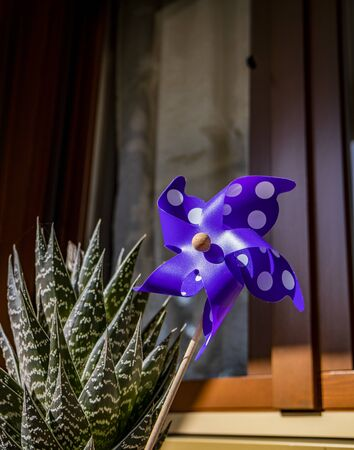 A Catherine wheel wind (pinwheel) purple with white dots and wooden stick, in a vase with an aloe plant, in the sun, on a window sill.