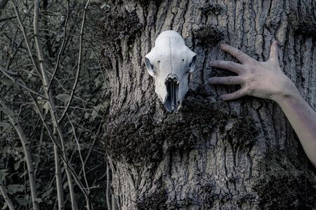 A horror, Halloween concept. A sheep skull hanging from a tree, with a hand reaching out.