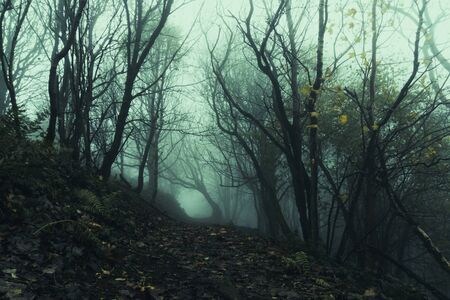 A path going through an eerie, spooky forest. On a misty winters days. Stok Fotoğraf