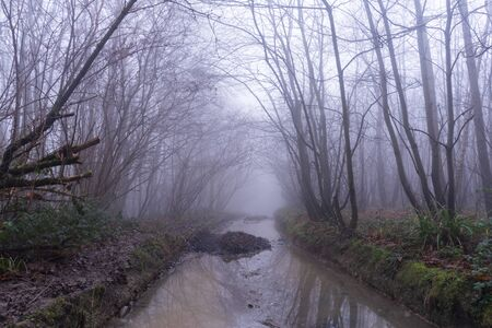 A muddy wet path through a spooky forest. On a foggy, winters day